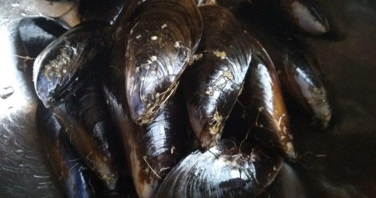 ムール貝とその下処理方法