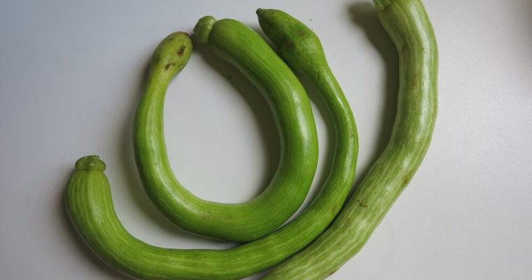 ズッキーニ・トロンベッタ(トランペットズッキーニ)
