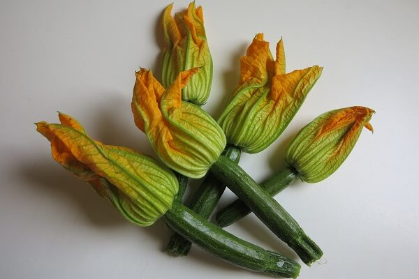 fiori di zucca 花ズッキーニ